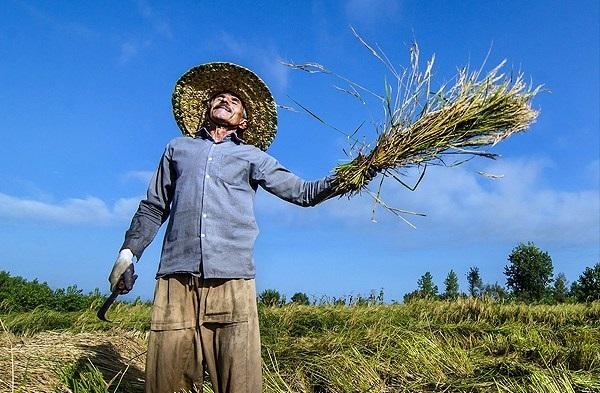 دست کشاورزان به رئیس جمهور نرسید