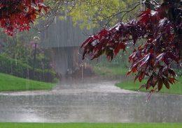 نصف سال گذشته هم باران نبارید