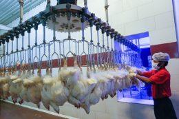 گسترش بیماری آنفلوانزای فوق حاد پرندگان در ۱۱ استان