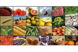 سود بازرگانی واردات ۹ قلم کالای کشاورزی اعلام شد