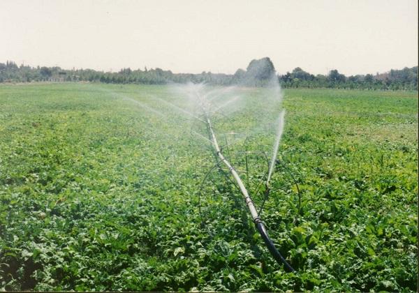 ۱۴ پیشنهاد برای حل چالش های بیمه کشاورزی در ایران