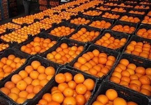 اعمال فشار افراد خاص به جهادکشاورزی برای واردات پرتقال