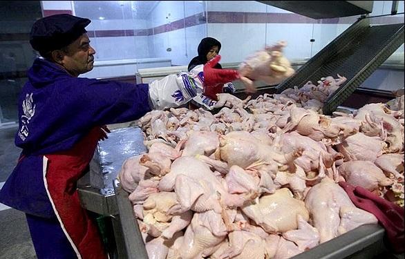 افزایش قیمت مرغ در شب عید قطعی است