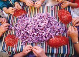 عرضه زعفران در بورس به نفع دلال است