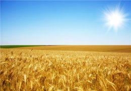 سال پررونق کشاورزی ایران