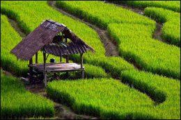 فعالیت۶۰۰گشت حفاظت از اراضی کشاورزی در نوروز