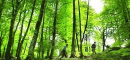 تصرف اراضی منابع طبیعی را به ۱۵۰۴ اطلاع دهید