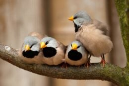 لانه گذاری پرندگان در بوستان های تهران