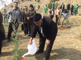 کاشت ۱۰۰ هزار درخت در منطقه دو تهران