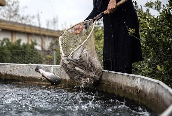 تولید ۹۰ هزارتن ماهی قزل آلا در کشور