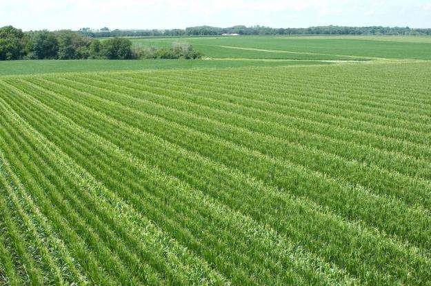 آلودگی ۳۵ درصد محصولات کشاورزی کشور