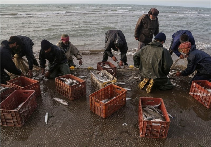 کاهش ۳ درصدی صید ماهیان استخوانی در کشور