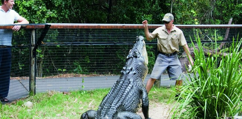 کروکودیل تمساح غذا دادن اقتصاد رفتاری ریسکپذیری ریسکگریزی