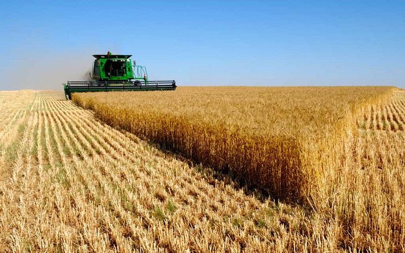 کشاورزی حفاظتی در یک میلیون هکتار از اراضی کشور انجام شد