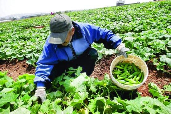 رد ادعای روزنامه کیهان درخصوص افزایش واردات محصولات کشاورزی در دولت یازدهم