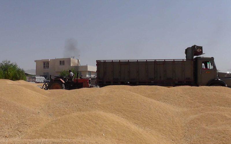 ذخایر گندم برای مصرف بیش از یک سال کافی است