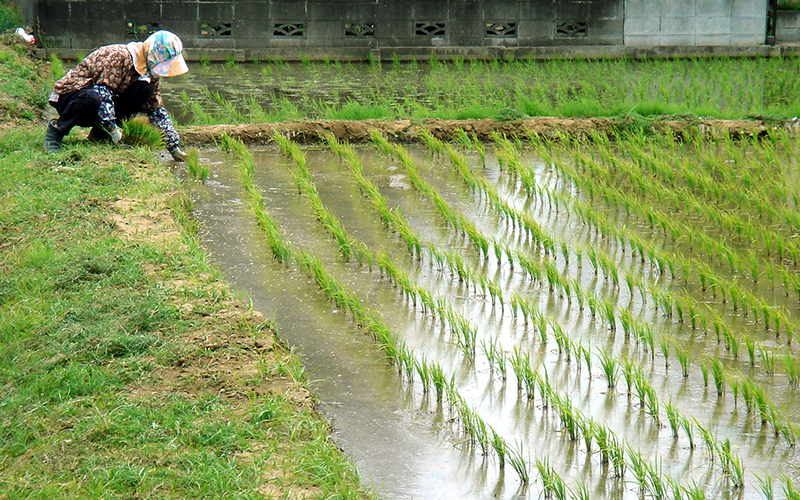 حفر چاه غیرمجاز برای کشت برنج / کشاورزان از کشاورزی منصرف شدند / آب شرب هم نیست؟