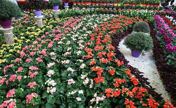 آموزش رایگان پرورش گل و گیاه در بوستانهای منطقه ۶