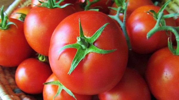 گوجه فرنگی تا دو هفته دیگر گران می ماند
