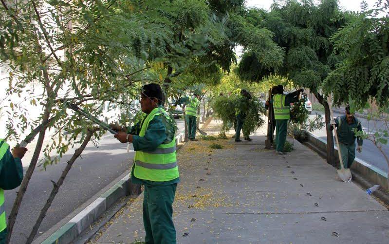 ۲۰۰،۰۰۰ مترمربع از درختچههای شمال شرق تهران هرس شد