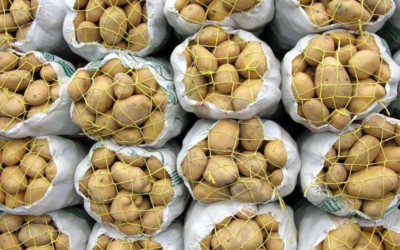 ایران در تولید سیبزمینی خودکفا شد