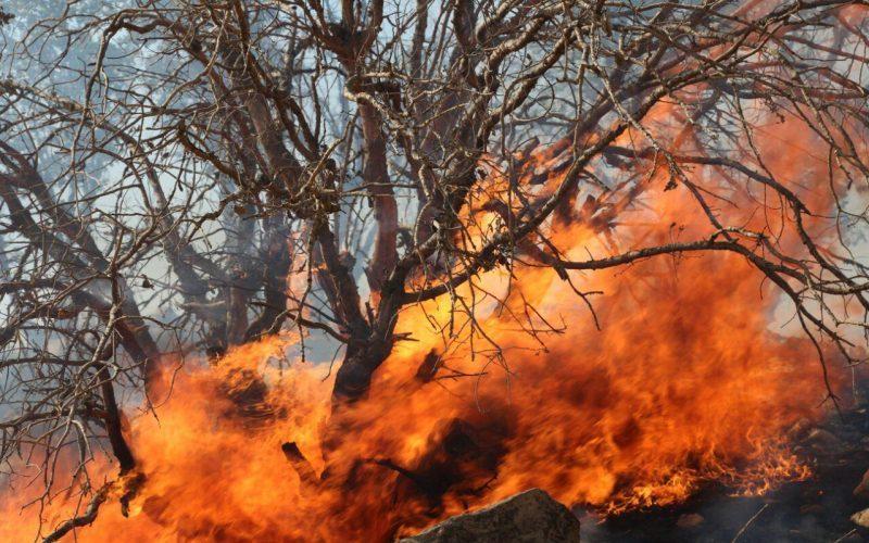 کابوس آتش روی سر سرخدارها و جنگلهای هیرکانی