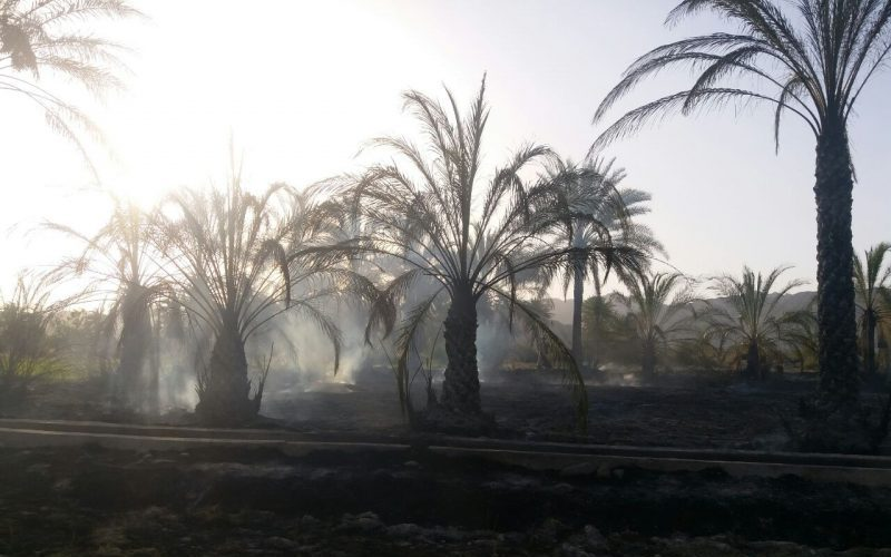 گرما 112 نخل در قصرقند را سوزاند