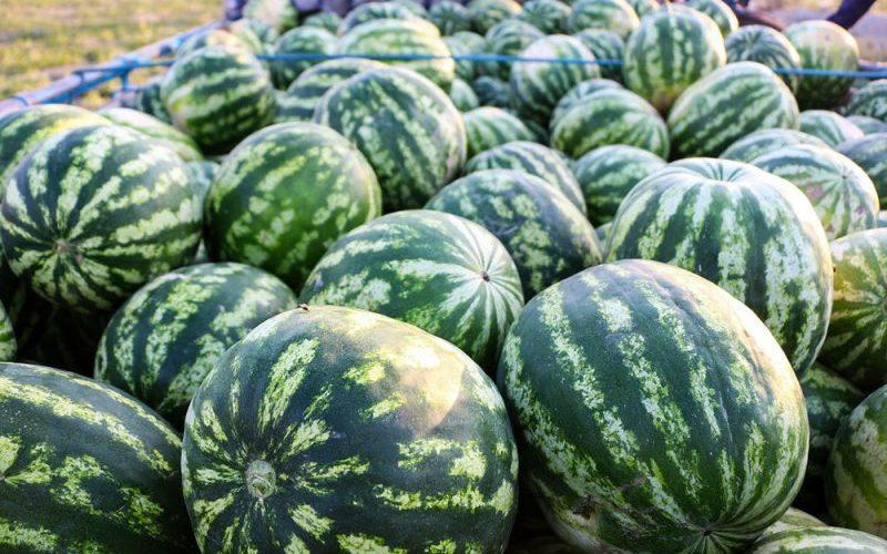 قیمت هندوانه شب یلدا چقدر است؟/ کمبودی در بازار میوه نداریم