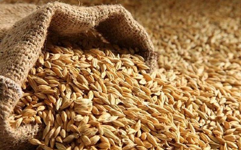 صادرات برخی اقلام کشاورزی بلامانع است