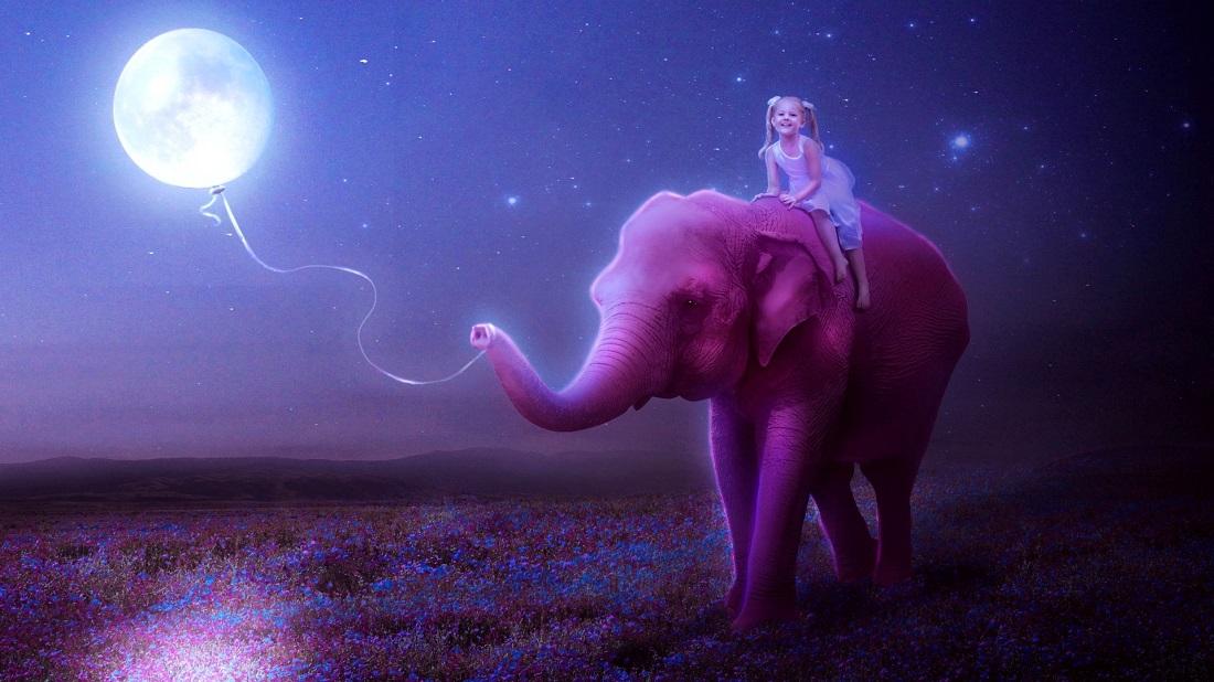 فیل صورتی خلاقیت