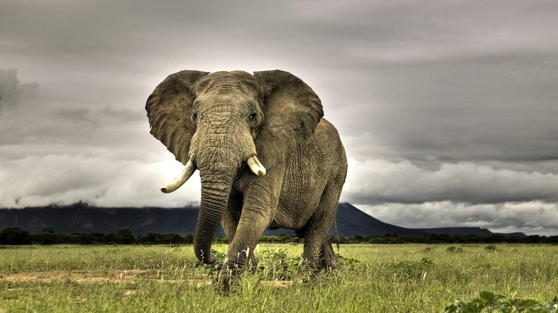 فیل نر می خواهد و مرد کهن خلاقیت