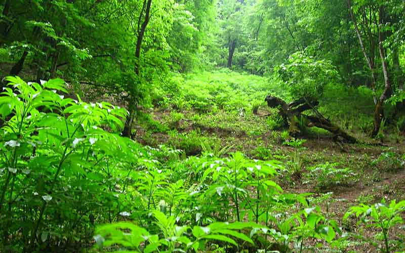 طرح ممنوعیت بهرهبرداری از جنگل فقط مخصوص شمال کشور است