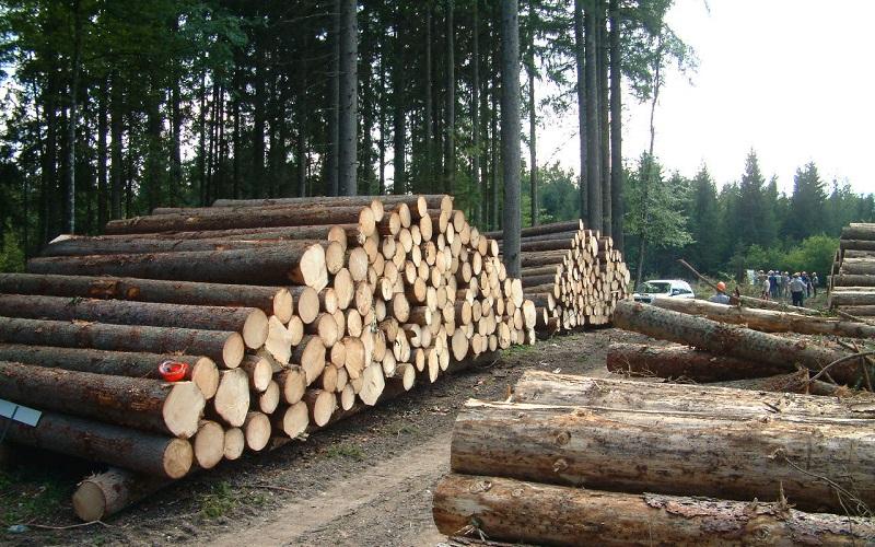 بیش از ۱۰ تن زغال و چوب قاچاق در سنندج کشف شد