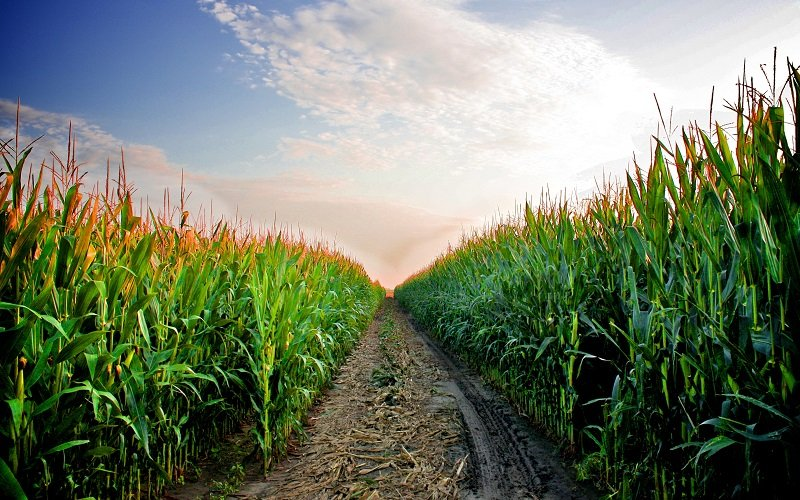 حوادث آبوهوایی تهدیدی برای محصولات حیاتی کشاورزی