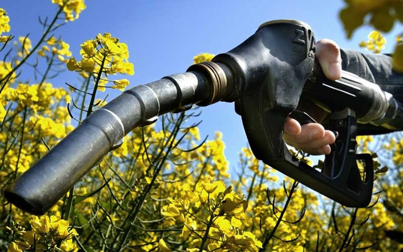 سوخت زیستی؛ راهکاری برای کنترل مصرف سوختهای فسیلی