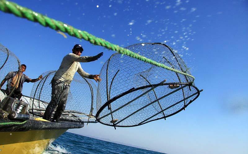 صید در آبهای بوشهر ممنوع شد