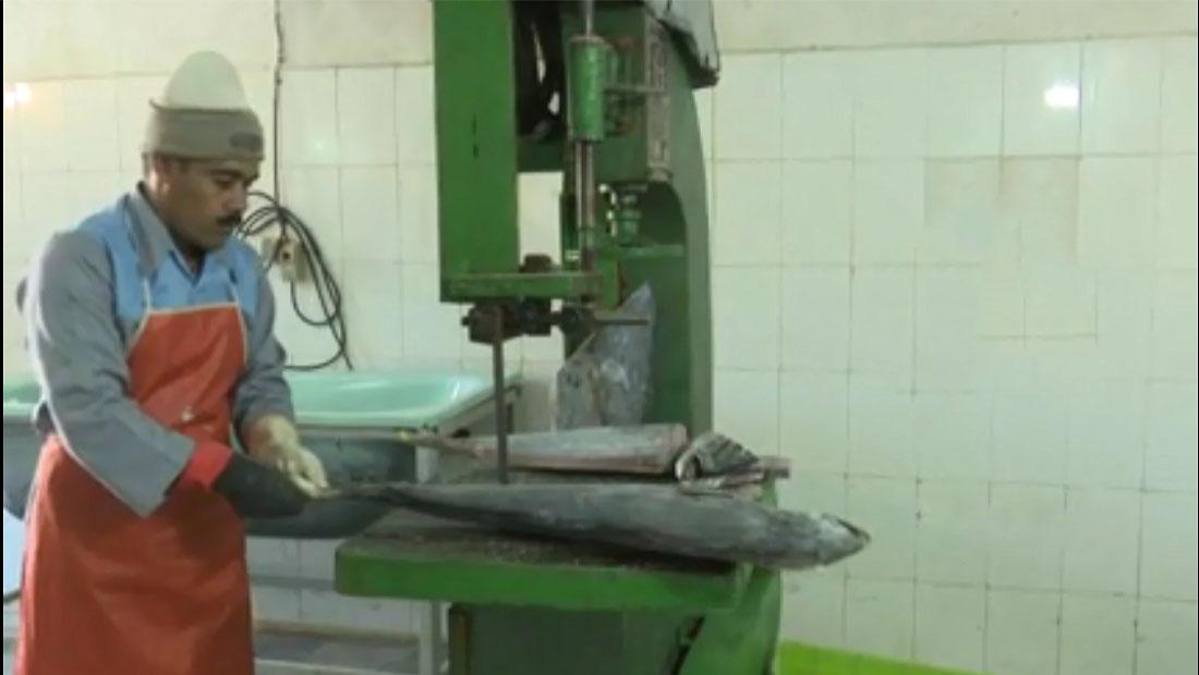 واحد بستهبندی آبزیان در خراسان جنوبی با توان تولیدی 45 تن در ماه