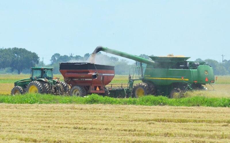چین برای اولین بار برنج آمریکایی وارد میکند