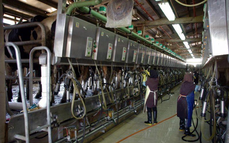 صنعت دامداری از کرونا چه تاثیری پذیرفته است؟