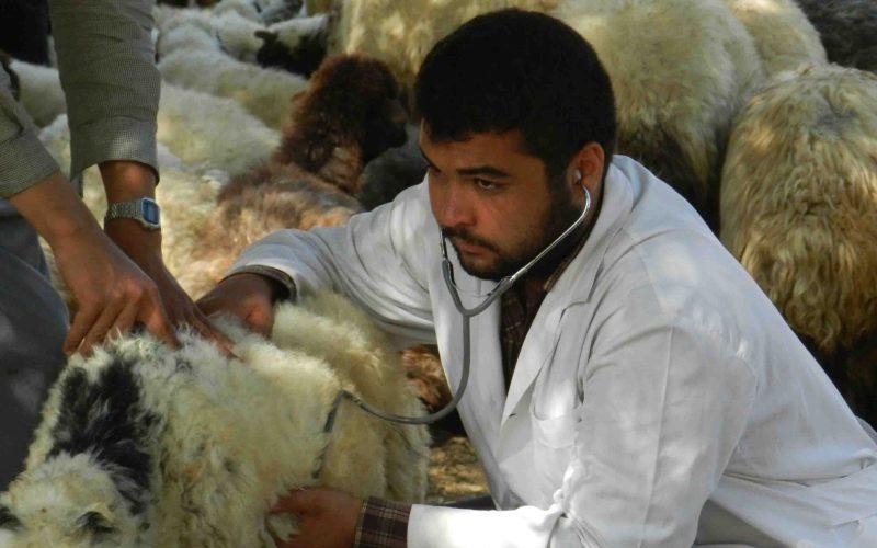 واردات حیوانات از کشورهای آلوده به کرونا ممنوع شد