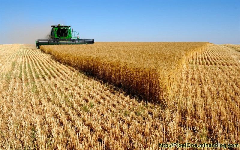 پرداخت نیمی از بهای گندم کشاورزان خراسان