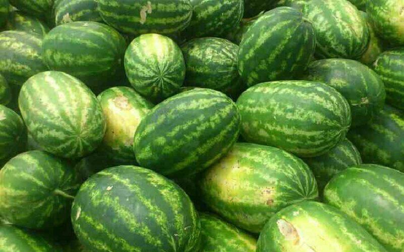 هر کیلو هندوانه صادراتی ۶۰۰ تومان