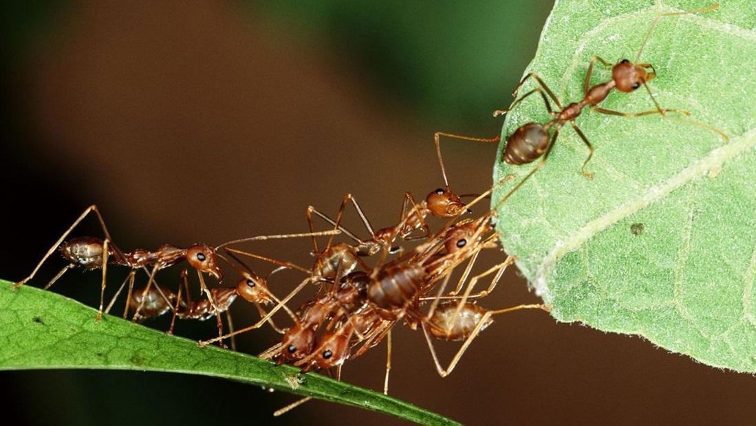 پیچیدگی سازمانی مورچه سازمان
