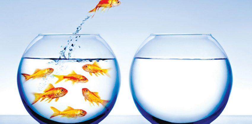 استراتژی اقیانوس آبی رقابت کار بازار تجارت