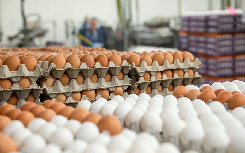 تورم بهاری تخممرغ بیش از 56 درصد شد