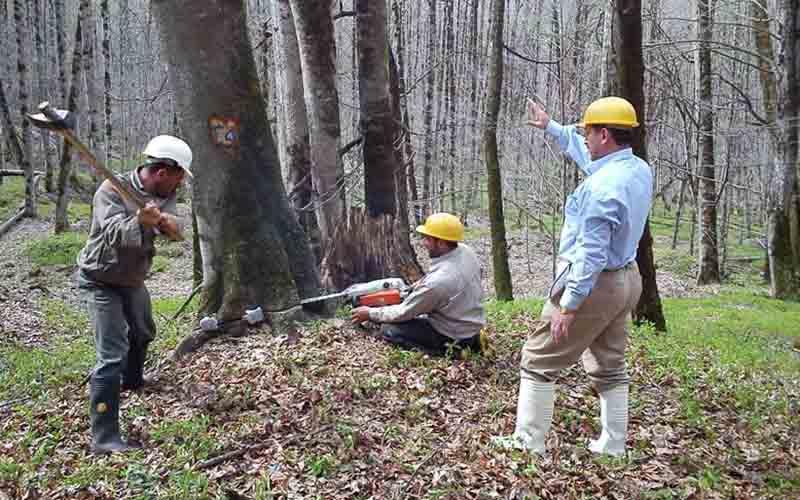هیچ درختی در جنگلهای هیرکانی امسال قطع نمیشود