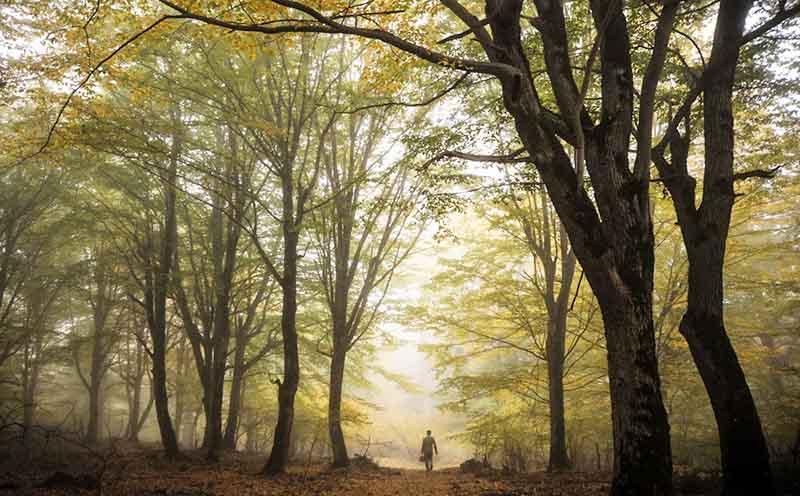 مدیریت مشارکتی جنگل