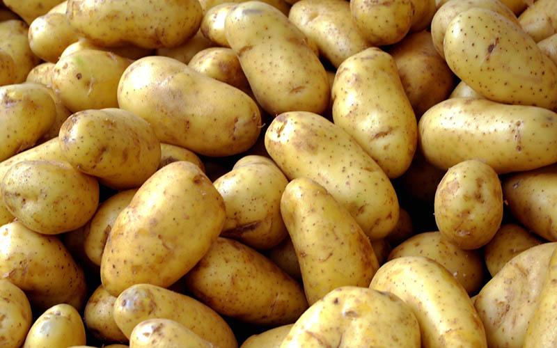 قیمت داخلی سیبزمینی ۲۰۰ درصد گرانتر از صادراتی