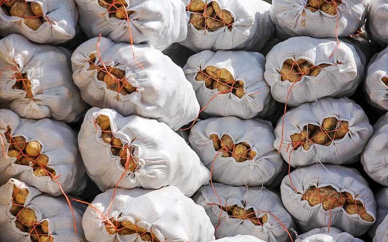 سود ۱۰ هزار تومانی خارجیها از خرید هر کیلو سیبزمینی ایرانی!