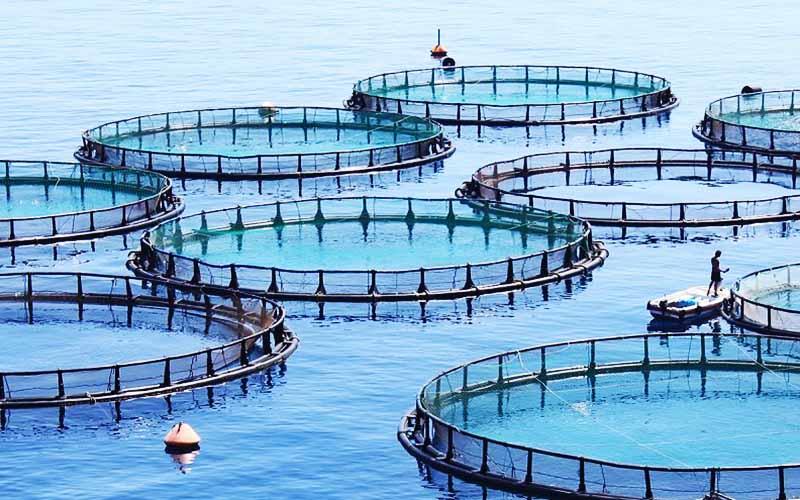 توسعه پرورش ماهی در قفس در دریای خزر